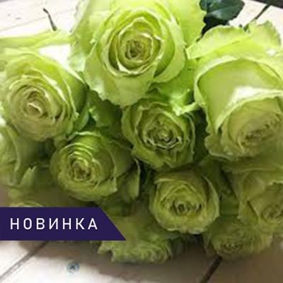 Роза чайно-гибридная Лимонад